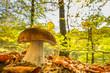 canvas print picture - leuchtender Herbstwald mit frischem Steinpilz