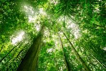 Green Forest Background Textur...