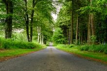 Empty Leading Asphalt Road Wit...