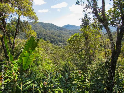 Obraz na plátně Inside at rainforest of Ranomafana National Park in eastern Madagascar