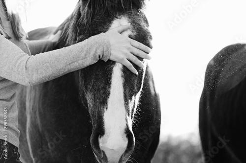 Cuadros en Lienzo Woman petting horse close up on farm, animal companion concept.