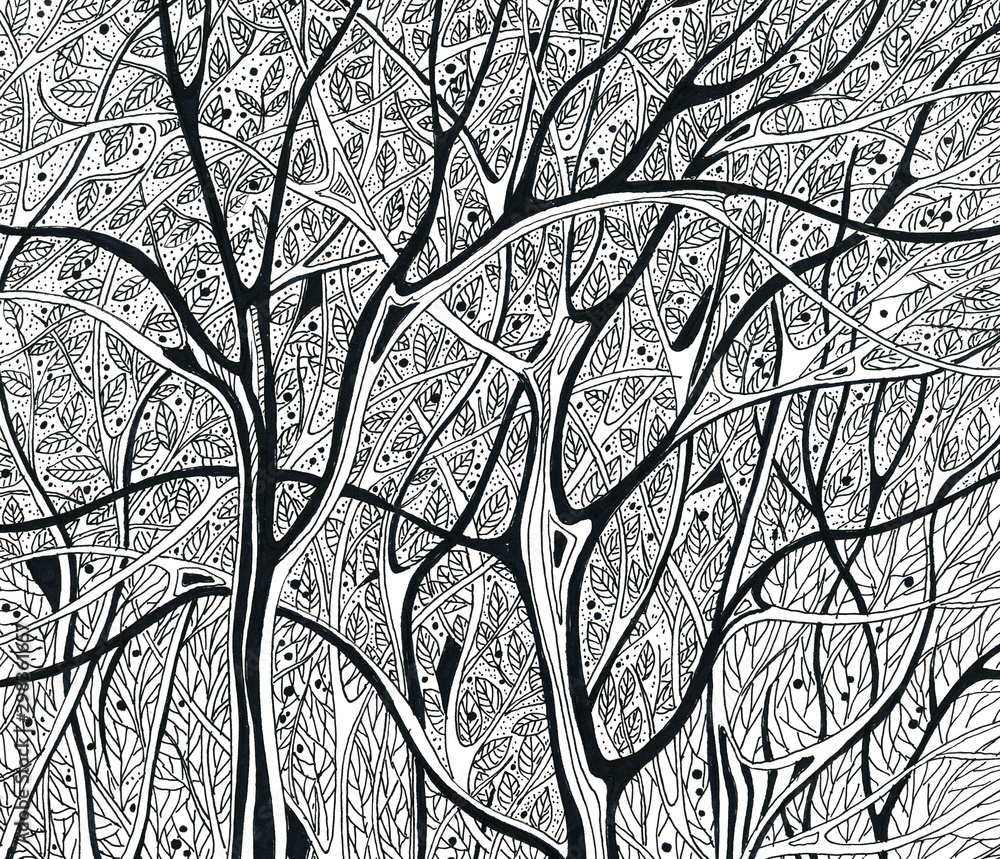 Fototapeta winter trees without leaves black and white graphics drawing