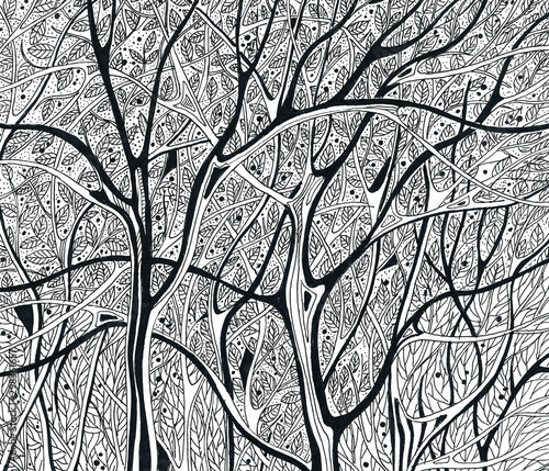 Fototapeta winter trees without leaves black and white graphics drawing obraz