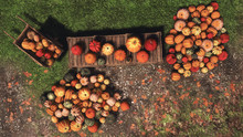 Top View Of Various Colorful Autumn Pumpkins For Sale At Outdoors Country Market For Thanksgiving Or Halloween Holidays. With No People Festive Fall Season 3D Illustration.