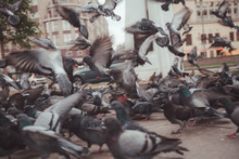 Pigeons In A City. Concept Of ...