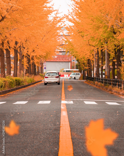 Golden leaves of trees framing the road as cars passing by. Leaves falling during autumn season.
