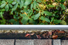 Fall Cleaning, Rooftop View Of Gutter Full Of Leaves And Standing Water, Rhododendron Bush Below