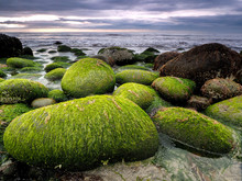 Stones Covered By Green Seawee...