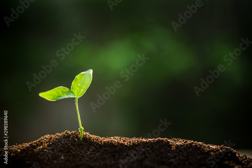 The Sapling are growing from the soil with sunlight Fototapet