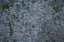 Rock Texture With Green Moss A...