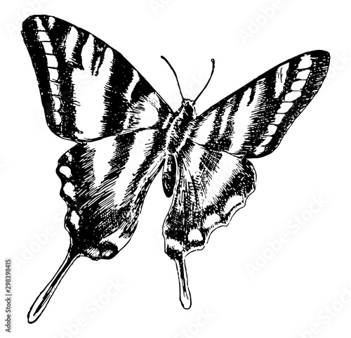 P Ajax Butterfly, vintage illustration. Wallpaper Mural