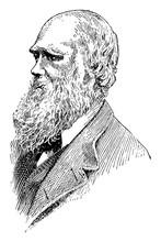 Charles Darwin, Vintage Illustration