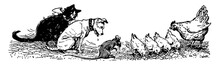 Animals, The Little Red Hen, Vintage Illustration