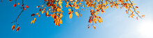 Multi Colored Autumn Leaves On Blue Sky Background