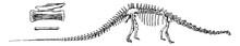 Diplodocus, Vintage Illustrati...