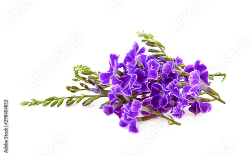 Violet flower on white background