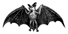 Spectral Bat, Vintage Illustra...