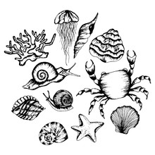 Monochrome Underwater Creatures Vector Hand Drawn Illustrated Set