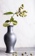 Crepe Myrtle Green Flower Buds...