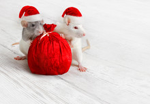 Christmas Rats With Santa Clau...