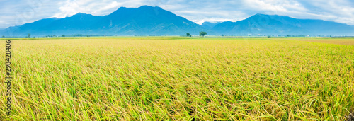 Montage in der Fensternische Orange Beautiful Rice Fields in taitung . Taiwan