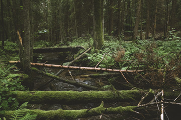 Dark and moody edit of a little creek in a magical fantasy forest in bavaria. Spooky mystical feeling. Rotten  wooden bridge used by knights. Covered with fern and moss.