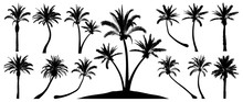 Palm Trees Silhouette. Isolate...