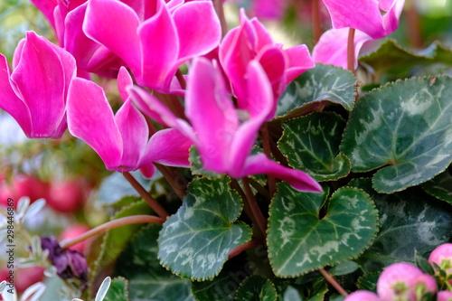 Spoed Fotobehang Roze colorful flower garden