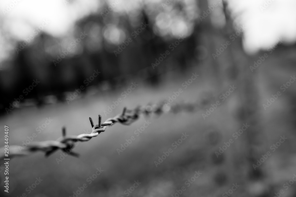 Fototapeta Barbed wire fence closeup view