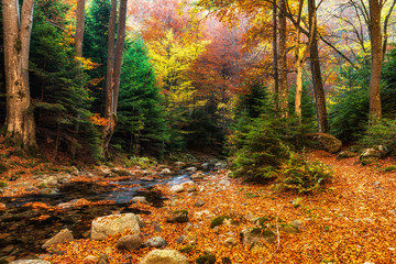 Panel Szklany Drzewa Autumn mountain colors of Old River ( Stara reka ) , located at Central Balkan national park in Bulgaria