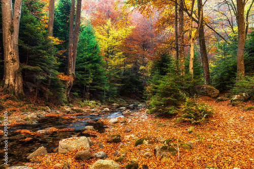 Autumn mountain colors of Old River ( Stara reka ) , located at Central Balkan national park in Bulgaria