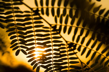 Shadows Of Leaves And Sunlight...