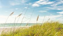 Sand Dunes With Grass On Beach...