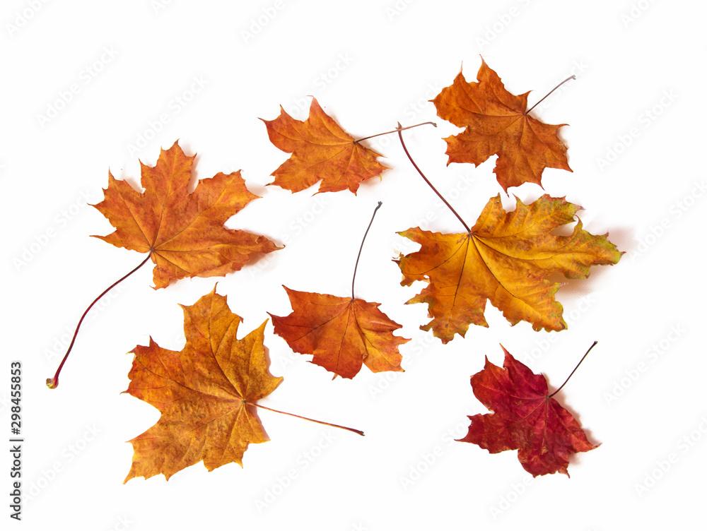 Fototapeta Leżące jesienne liście