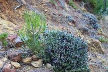 Plantas Y Floares Del Bosque