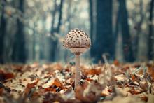 Kiev Ukraine, Autumn Season Mu...