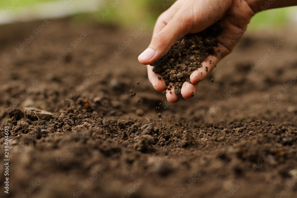 Fototapeta Expert hand of farmer checking soil health before growth a seed of vegetable or plant seedling. Gardening technical, Agriculture concept.