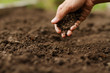 Leinwanddruck Bild - Expert hand of farmer checking soil health before growth a seed of vegetable or plant seedling. Gardening technical, Agriculture concept.