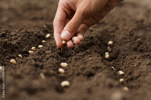 Foto Hand growing seeds of vegetable on sowing soil at garden metaphor gardening, agriculture concept