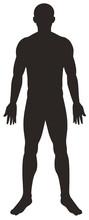 Silhouette Man On White Backgr...