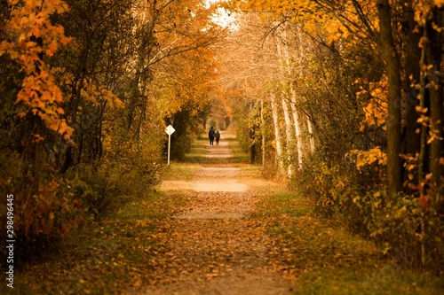Fototapety, obrazy: Beautiful shot of people walking in a majestic autumn park full of different shades of yellow