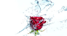 Red Rose With Water Splash And...