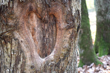 Heart Shaped Hollow, Tree Bark Background, Natural Wood Texture, Love