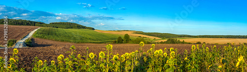 Fotobehang Cultuur beautiful panoramic view of wheat field, ears and yellow and sunflowers