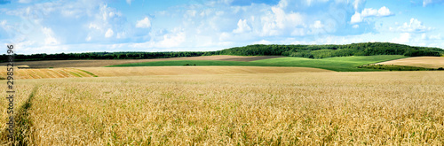 Foto op Plexiglas Weide, Moeras big panoramic view of landscape of wheat field, ears and yellow and green hills