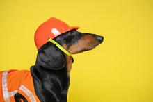Dachshund Dog, Black And Tan, ...