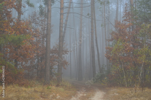Foto op Canvas Bos Morning fog after a night in the forest