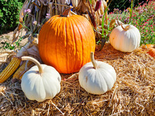 Decorative Pumpkins On Bale Of...