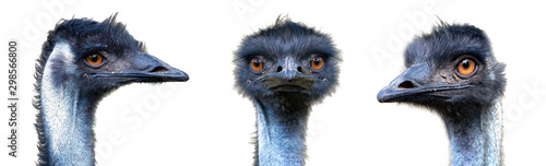 Spoed Fotobehang Vogel Identity portraits from different parties of Australian Emu bird (Dromaius novaehollandiae) isolated on white background.