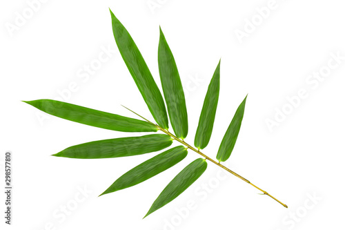 Fototapeta Green bamboo leaves pattern isolated on white background,Front view obraz na płótnie